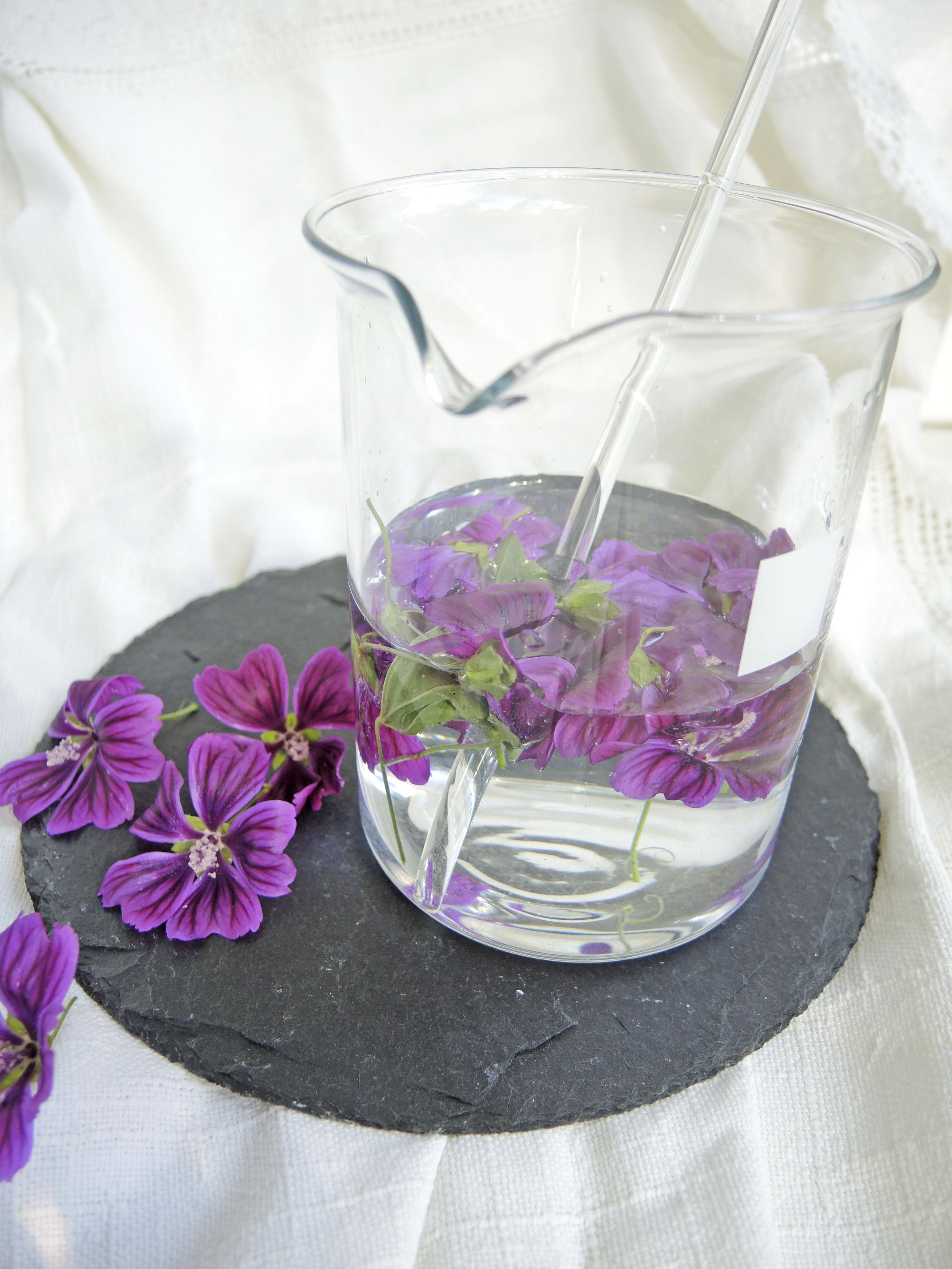 Malve_Wasser