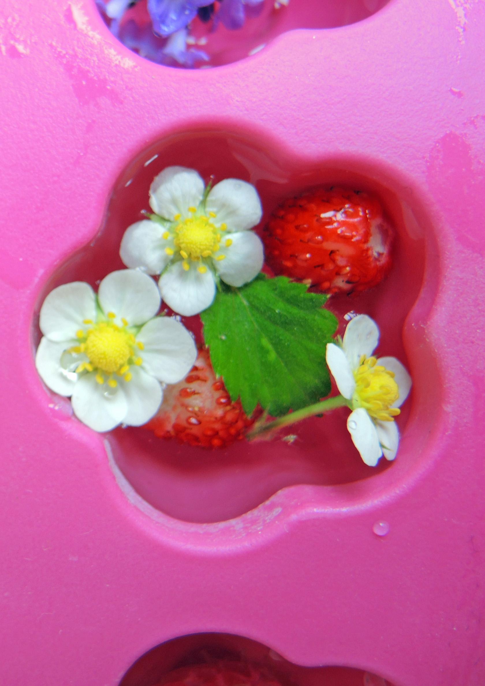 Erdbeere_nah