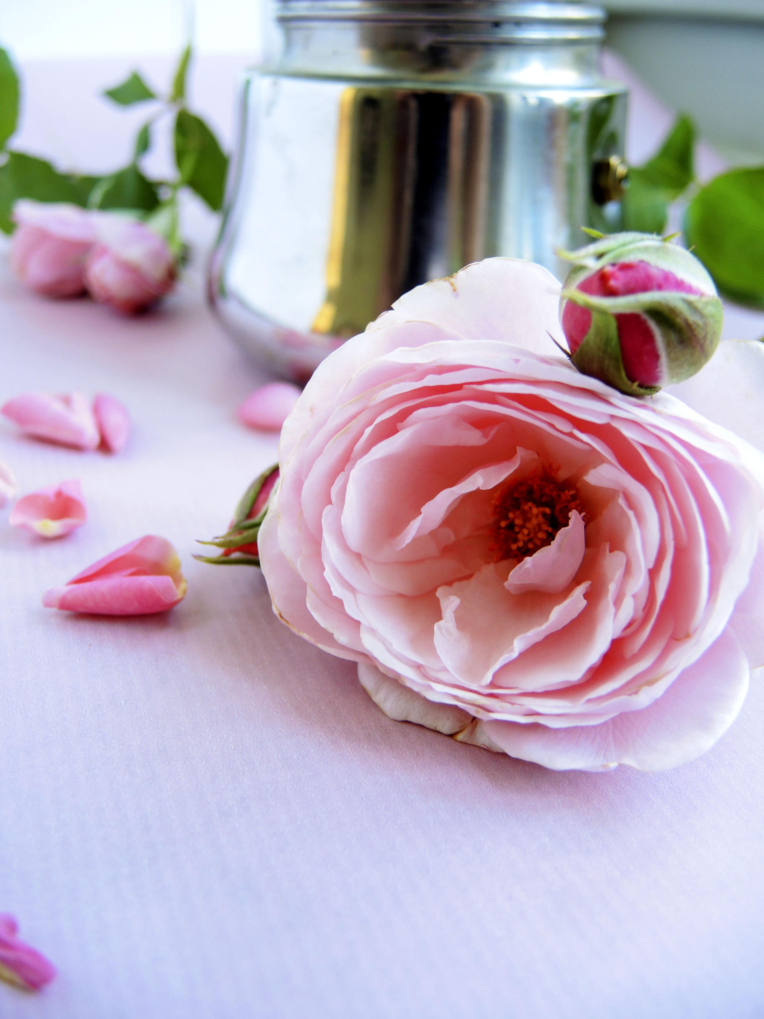 Rose_nah