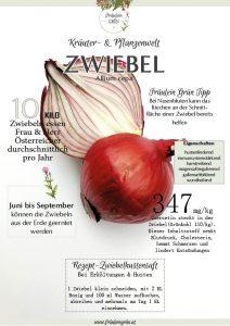 Heilpflanze Zwiebel