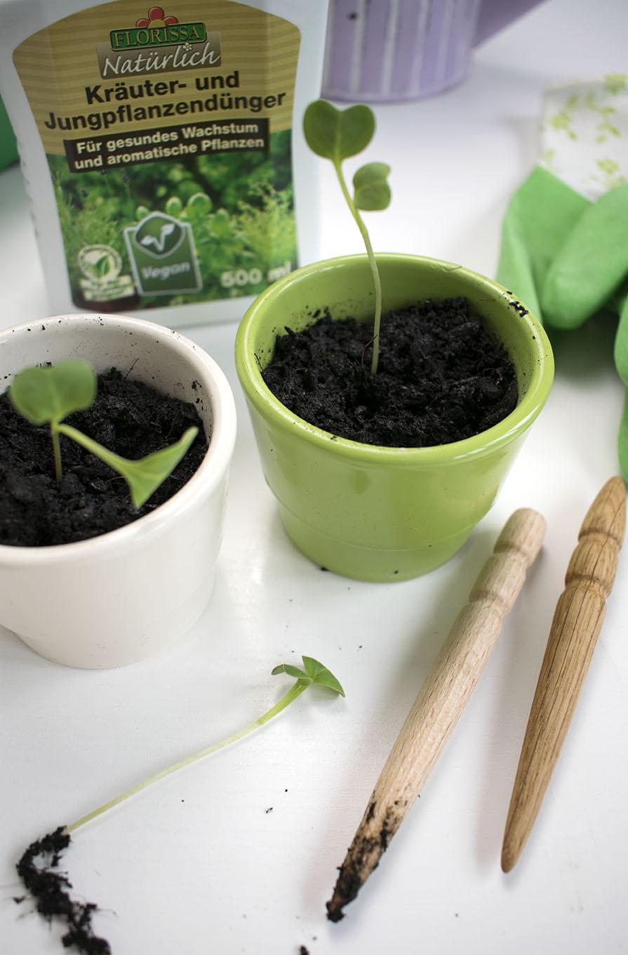 von anfang an richtig vom samen zur gesunden pflanze. Black Bedroom Furniture Sets. Home Design Ideas