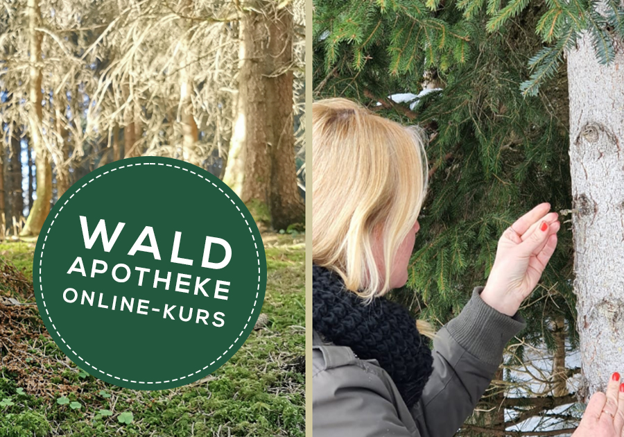 Waldapotheke - Online Kurs